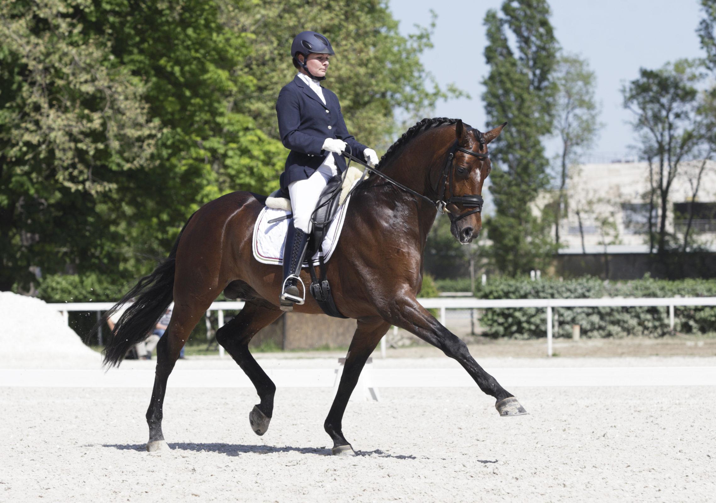 Mel Equine, muscular equine locomotion, Emmett therapy, equine massage, horse massage, melanie harris, maitland